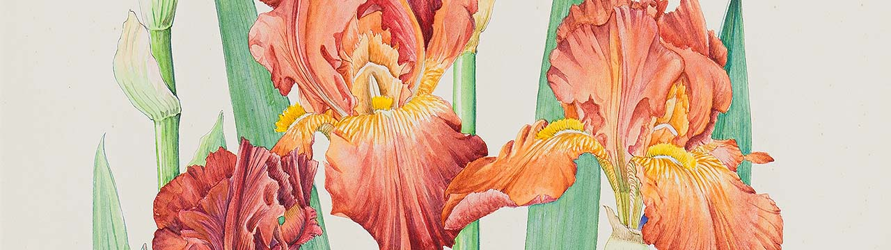 A story of art, gender and science unearthed in Strauss & Co's June sale of botanical art